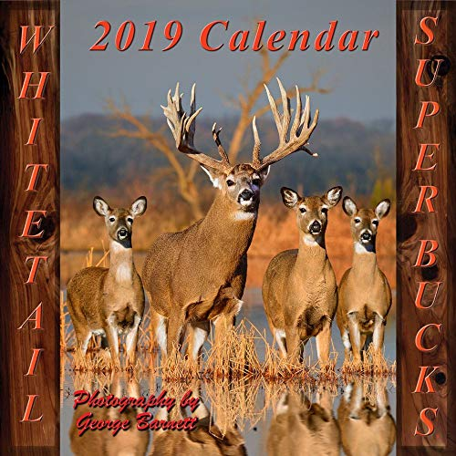 2019 Deer Whitetail Super Bucks Wall Calendar, Deer by George Barnett Photograph