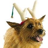 Reindeer Antlers - LARGE
