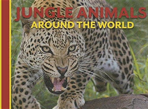 Jungle Animals Around the World