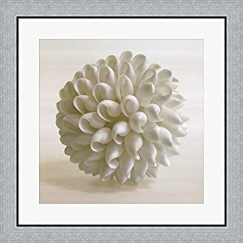 Amazon.com: Shell III by Darlene Shiels Framed Art Print Wall Picture, Flat Silver Frame, 26 x 26 inches: Posters & Prints