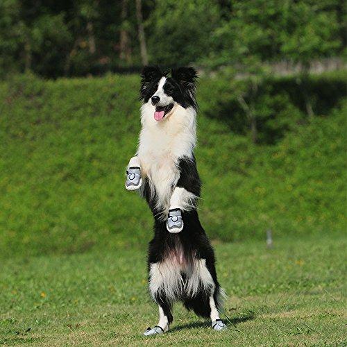 RoyalCare Botas para Perros Paw Protector, Juego de 4 Zapatos para ...