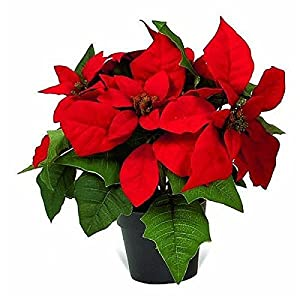 27cm artificial red christmas poinsettia plant in pot kitchen home. Black Bedroom Furniture Sets. Home Design Ideas