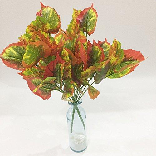 indoor bush plants - 7