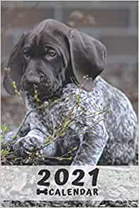German Shorthaired Pointer 2021 Dog Breed Calendar 15/% OFF MULTI ORDERS!