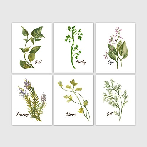 Watercolor Herb Prints, Kitchen Decor - Set of 6