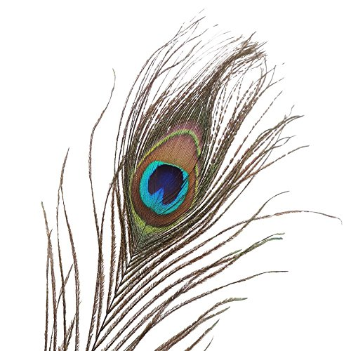 Barelove Natural Peacock Tail Eyes Feathers Perfect for Wedding Party Arts ,Halloween Costume And Crafts Home Decorations DIY ,12inch (20 (Halloween Diy Decorations And Crafts)
