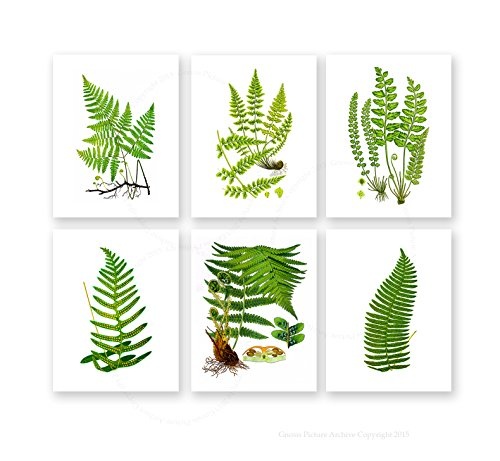botanical illustration poster