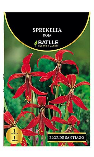 Bulbos - Sprekelia roja - Batlle Semillas Batlle 076808bols