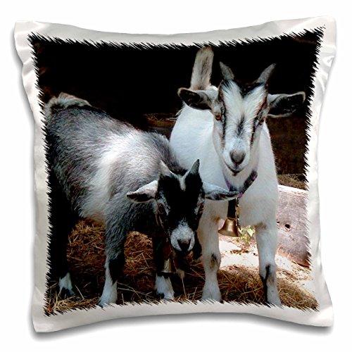 """3dRose pc_1068_1 Pygmy Goat-Pillow Case, 16 by 16"""""""