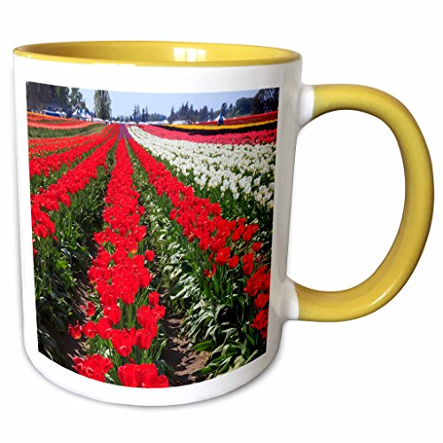 3dRose Danita Delimont - Farms - USA, Oregon, Woodburn, Wooden Shoe Tulip Farm - US38 RBR0707 - Rick A Brown - 11oz Two-Tone Yellow Mug - Oregon Woodburn Outlet
