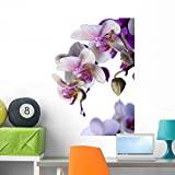 Wallmonkeys White Orchids Wall Decal Peel and Stick Graphic (36 in H x 25 in W) WM61131