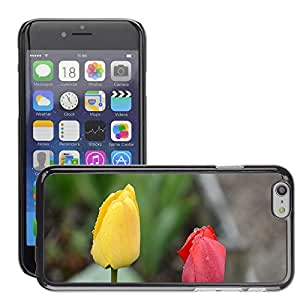 """Hot Style Cell Phone PC Hard Case Cover // M00152115 Tulip Lily Spring Nature Flowers // Apple iPhone 6 4.7"""""""