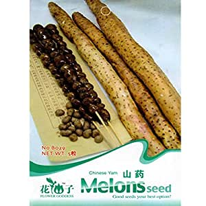 5pcs Chinese Yam Vegetable Seeds Garden Herbaceous Plant