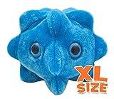 GIANTmicrobes - Common Cold (Rhinovirus) XL Size
