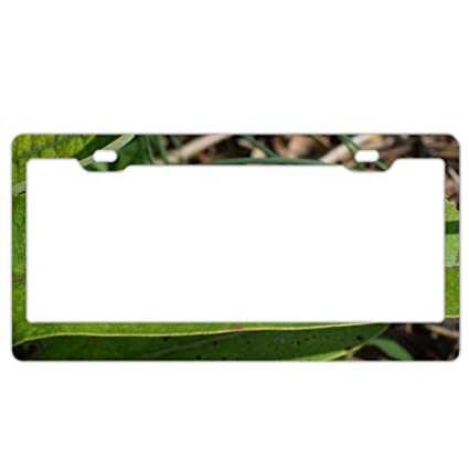 Amazon.com : EXMENI Baby Caterpillar License Plate Frame Theft-proof ...