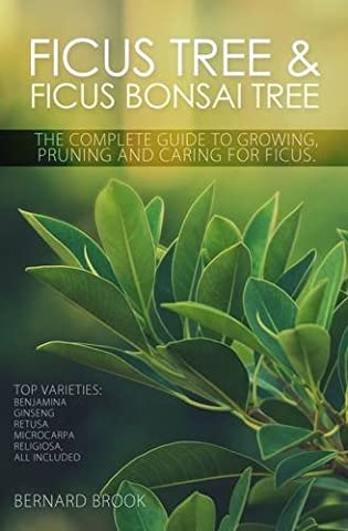 Ficus Tree and Ficus Bonsai Tree. The Complete Guide to Growing, Pruning and Caring for Ficus. Top Varieties: Benjamina, Ginseng, Retusa, Microcarpa, Religiosa all - Pruning Ficus Tree