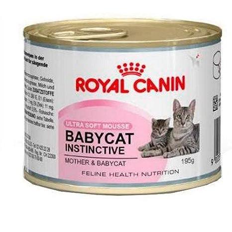 Royal Canin Babycat Instinctive, Comida para gatos, 195 g ...