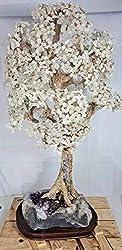 Clear Crystal Tree Quartz Light with Amethyst Base