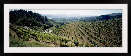 Newton Vineyard California - GreatBIGCanvas