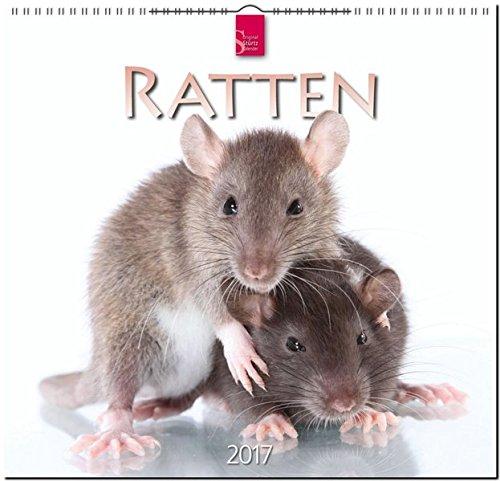 RATTEN - Original Stürtz-Kalender 2017 - Mittelformat-Kalender 33 x 31 cm