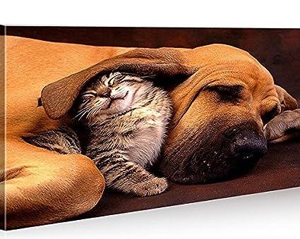 Quadro moderno mejores amigos Perros y Gatos Impresión sobre ...