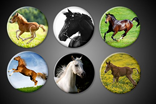 Pony Magnet (Horses Magnets or Pins set of 6 animal lover Stallion ponies colts Mares Majestic Horse Pinback Collection Jackets lockers (1 inch, Pinback))
