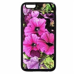 iPhone 6S / iPhone 6 Case (Black) Purple Petunias in October