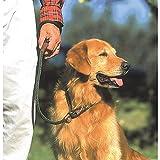 Mendota Small Twist Slip Dog Leash Size: 72'', Color Woodlands