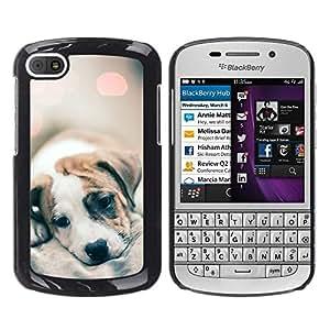 Cachorro Piel Luces borrosas lindos del perro del bebé- Metal de aluminio y de plástico duro Caja del teléfono - Negro - BlackBerry Q10