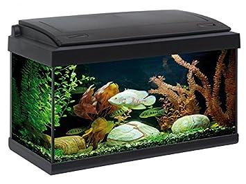 Mtb 1571260031 - acuario milo luxline 60 l, negro: Amazon.es: Productos para mascotas
