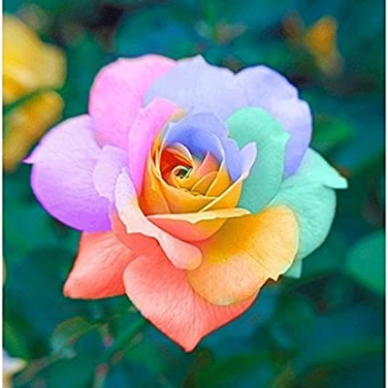 100 pcs-Mystic Multi-Colors Rainbow Rose Bush Flower Seeds For-Home-garden