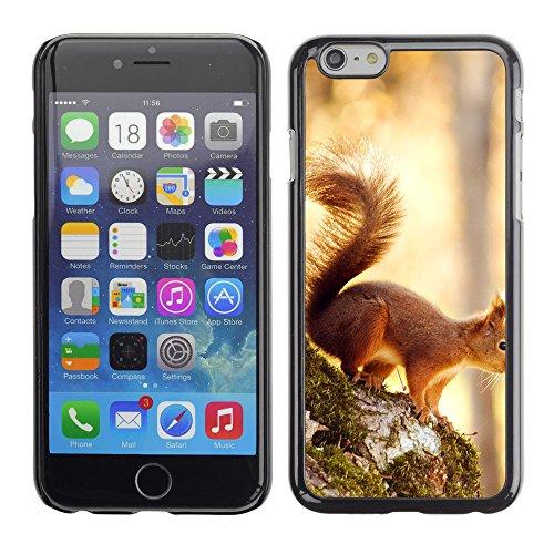 """Premio Sottile Slim Cassa Custodia Case Cover Shell // V00003872 écureuil 6 // Apple iPhone 6 6S 6G PLUS 5.5"""""""