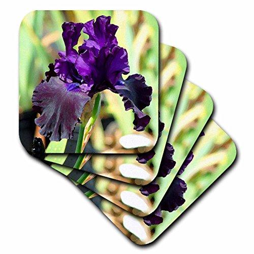 3dRose CST_4124_3 Purple Iris Ceramic Tile Coaster (Set of 4)