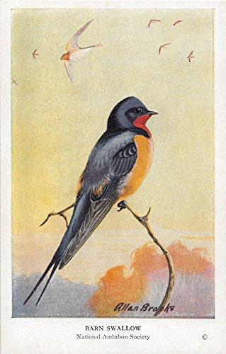 Barn Swallow 1939 Audubon Spring Birds of Eastern North America #37 (VG+)
