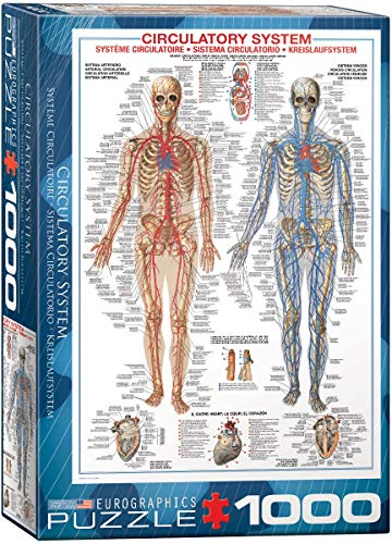 EuroGraphics Circulatory System 1000 Piece Puzzle