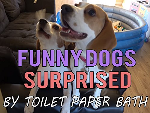 Funny Dogs Surprised By Toilet Paper Bath (Puppy Toilet Paper)