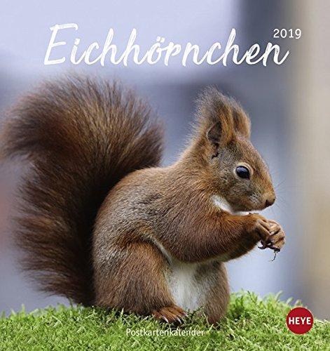 eichhrnchen-postkartenkalender-kalender-2019
