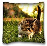 Decorative Square Throw Pillow Case Animals kitty furry s grass sunlight 18