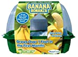 DuneCraft Sprout 'n Grow Greenhouses Banana