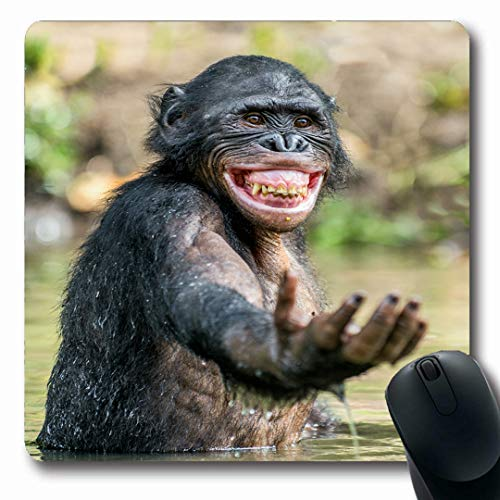Ahawoso Mousepads Wild Monkey Smiling Bonobo Water Pleasure Nature Funny Cute Ape Chimpanzee Happy Design Species Oblong Shape 7.9 x 9.5 Inches Non-Slip Gaming Mouse Pad Rubber Oblong (Best Nature Of Bonobos)