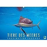 Tiere des Meeres: Faszination Tauchen (Wandkalender 2016 DIN A2 quer): Tauchen Sie ab in die blaue Tiefe der Ozeane (Monatskalender, 14 Seiten) (CALVENDO Tiere)