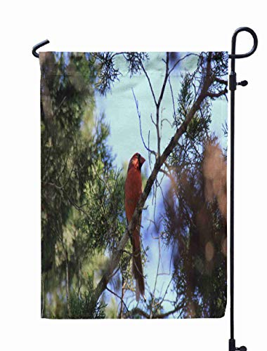 Shorping Welcome Garden Flag, 12x18Inch Single Red Bird Northern Cardinal on Evergreen Tree Long Park Hiking for Holiday and Seasonal Double-Sided Printing Yards Flags]()