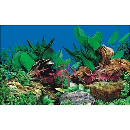Diseño de pecera de fondo para acuarios plantados - 60 cm - altura ...