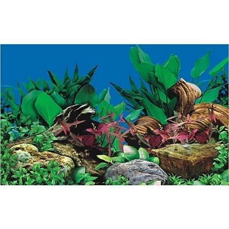 Diseño de pecera de fondo para acuarios plantados - 60 cm - altura 200 cm, diseño de Jacqueline colley Solutions todos los - Longitud de la: Amazon.es: ...