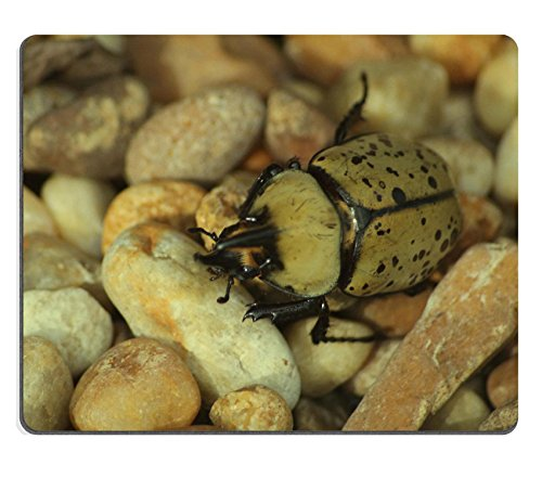 beetle-potato-colorado-bugs-insects-qzone-customized-made-to-order-cloth-with-neoprene-rubber-mouse-