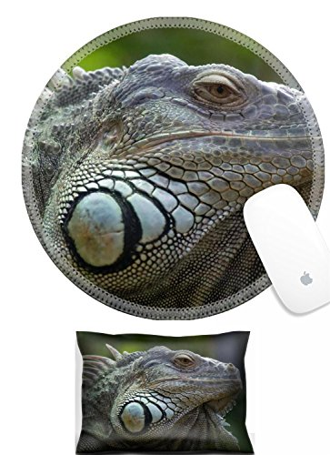 Luxlady Mouse Wrist Rest and Round Mousepad Set, 2pc Iguana in Zurich Zoo Switzerland IMAGE: 5090750 ()