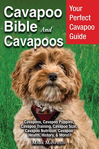 Cavapoo Bible and Cavapoos: Your Perfect Cavapoo Guide Cavapoos, Cavapoo  Puppies, Cavapoo Training, Cavapoo Size, Cavapoo Nutrition, Cavapoo Health,
