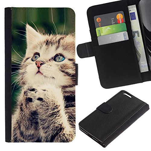 EuroCase - Apple Iphone 6 PLUS 5.5 - praying kitten American longhair wirehair - Cuir PU Coverture Shell Armure Coque Coq Cas Etui Housse Case Cover