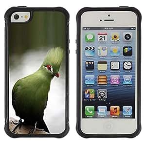 Suave TPU Caso Carcasa de Caucho Funda para Apple Iphone 5 / 5S / blue parrot tropical lake water branch / STRONG