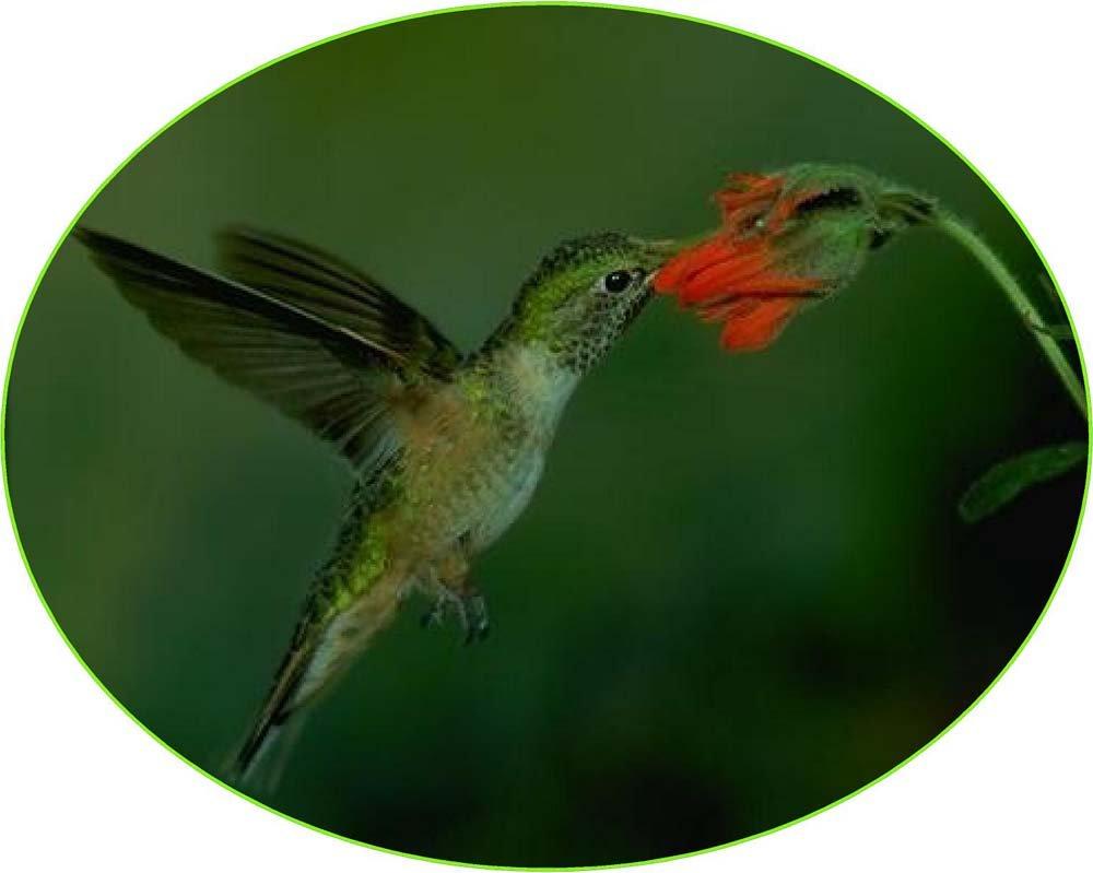レッドフラワー& Hummingbird – エッチングビニールStained Glass Film , Static Cling Window Decal 21 in x 33 in B00BS1D4NK 21 in x 33 in21 in x 33 in